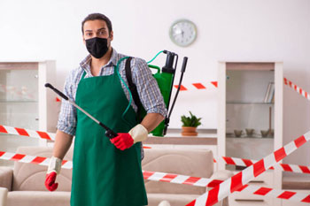 pest control in gold coast